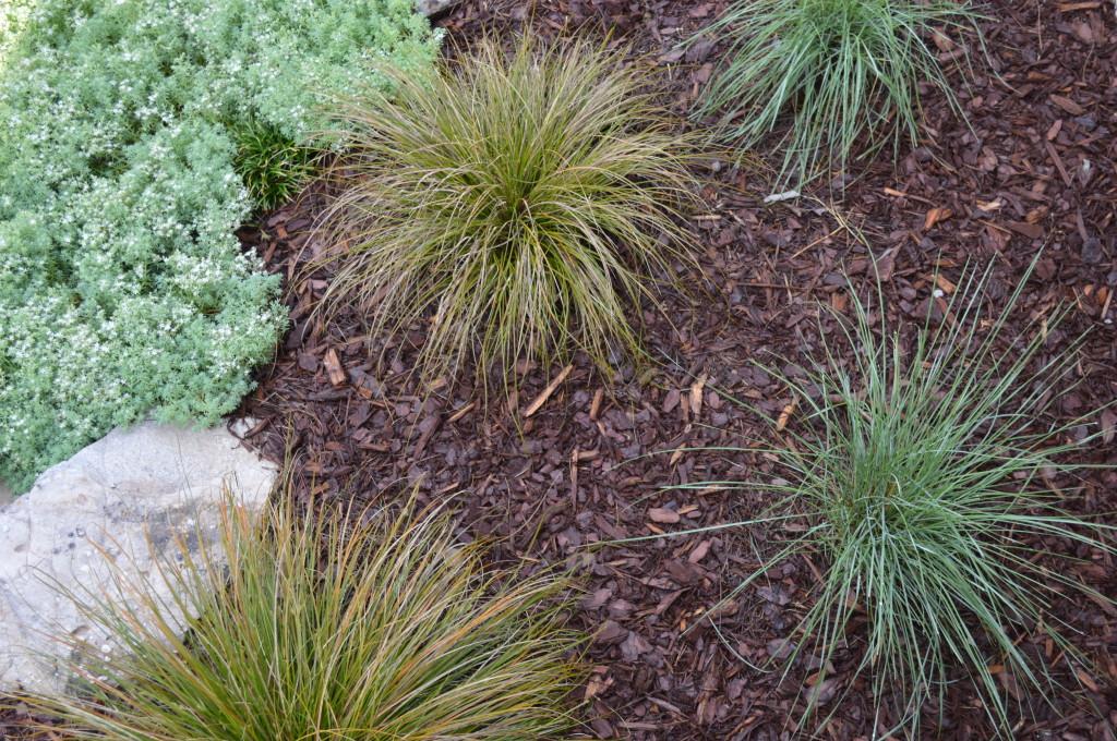 prairie-fire-carex-muhley-grass-blue-spruce-sedum