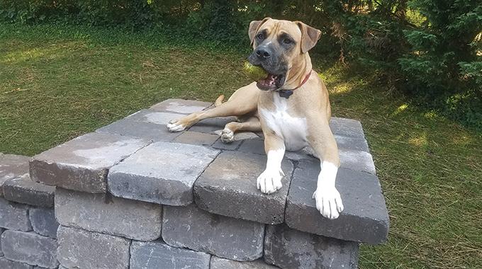 Stone Column Dog