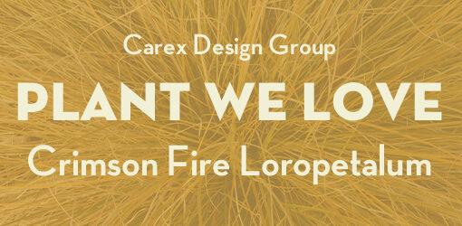 Orange Background With Words Plant We Love Crimson Fire Loropetalum